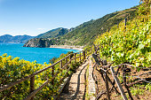 Path in vineyards, beautiful view of the sea and mountains. Cinque Terre national park, Liguria, Italy