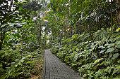 Path leading threw jungle scenery