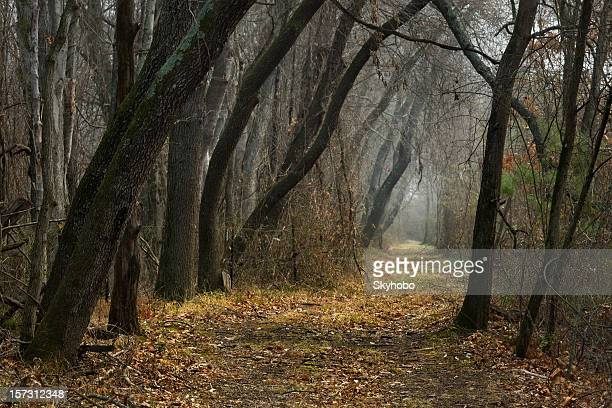 A path leading through a bare forest