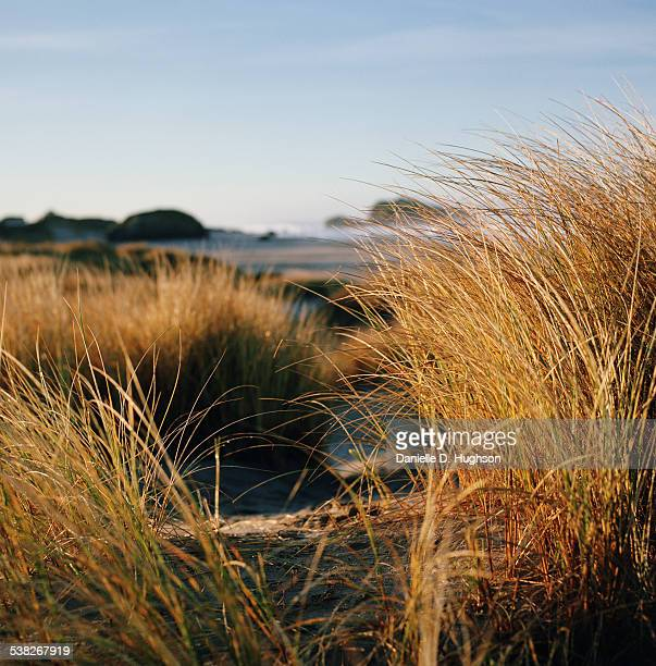 Path Leading Through Beach Grass to Ocean