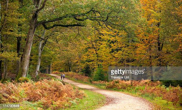 Path leading through forest, Hampshire