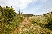 Path mown through long grass, Valencia region, Spain