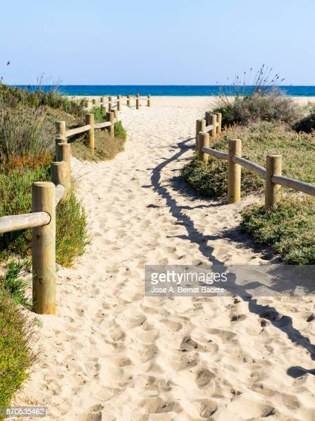 Path of sand that he leads to the beach between dunes with flowers and grasses with posts of wood, a day of the Sun and blue sky. Cala de Mosul, Cabo de Gata - Nijar Natural Park,  Almeria,  Andalusia, Spain