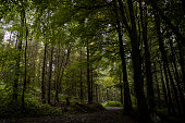 Forestry path though Buckland Forest, Brecon Beacons