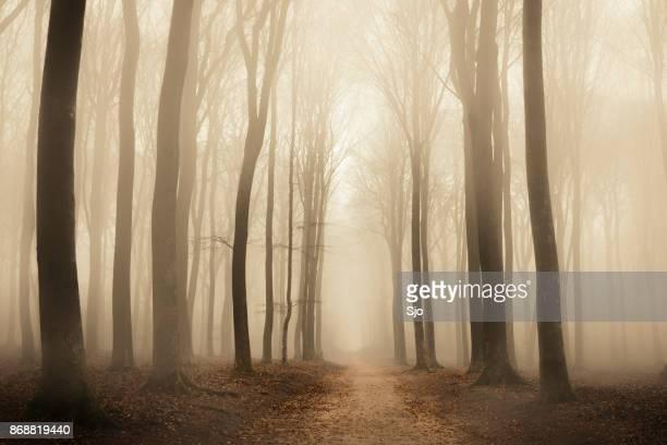 Pad door een mistige bos tijdens een mistige dag