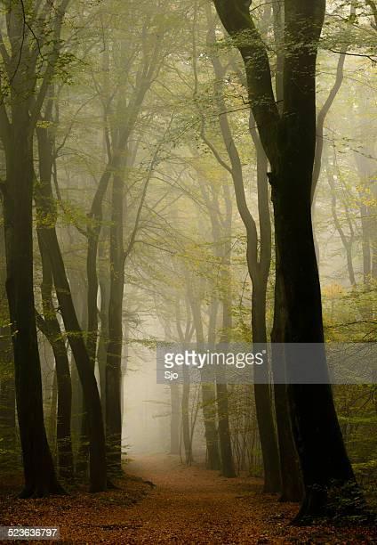 Path through a misty forest in autum