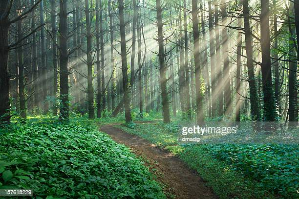 Chemin à travers une forêt enchantée avec Groundcover luxuriants