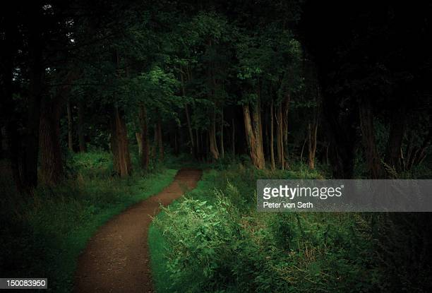 Path through deciduous forest