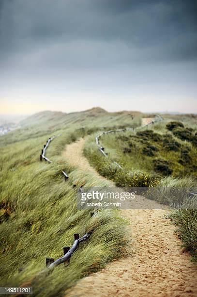 Path through dunes in Netherlands