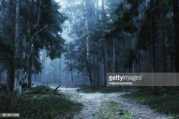 Path through forest in fog, Lithuania