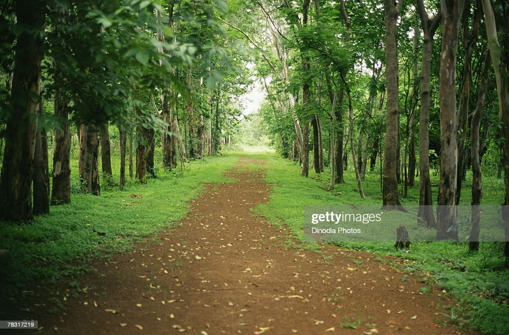 Bilaspur India  City pictures : Stock Photo : Path through green forest, Bilaspur Chattisgarh, India