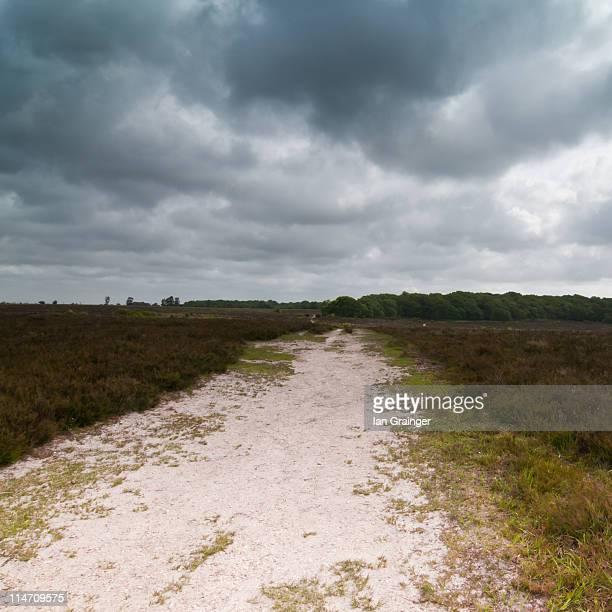 Path through landscape
