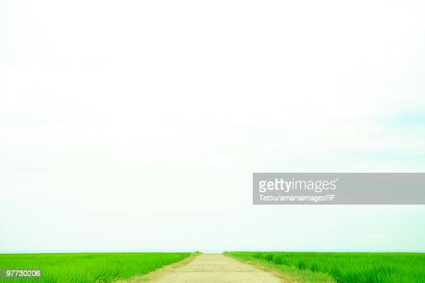 Path through rice paddies, Kyoutango City, Kyoto Prefecture, Honshu, Japan