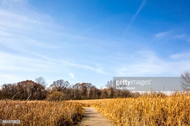 Path through tall grass field under blue sky