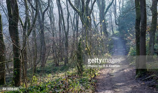Path through the mysterious woods