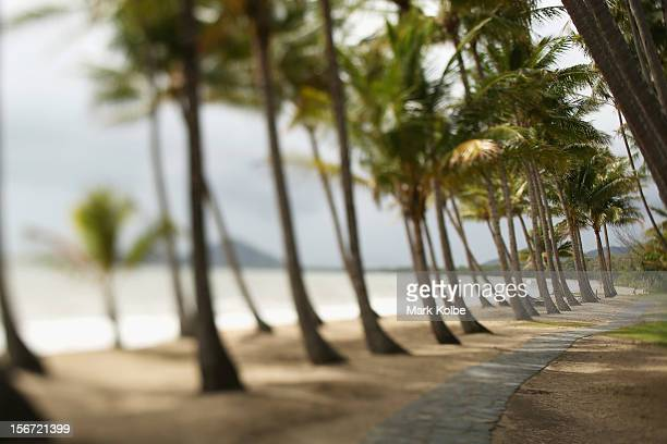 A path through the palm trees on the beach is seen on November 13 2012 in Palm Cove Australia Located in Far North Queensland the Cairns region is...