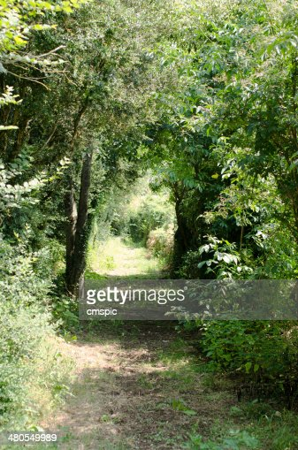 Path through trees : Stock Photo
