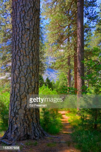 match & flirt with singles in yosemite national park A forest fire burning in the sierra nevada just west of yosemite national park has  job match indiana  it can maintain its single-minded focus on.