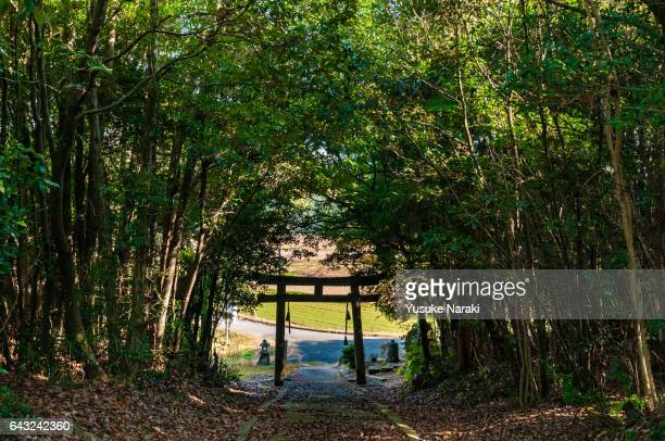 A path to a Japanese Shinto shrine surrounded by trees