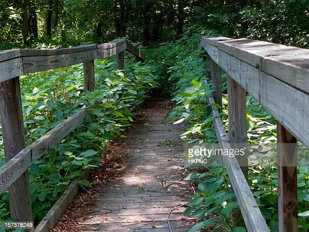 Path To Nowhere Hiking Trail Horizontal