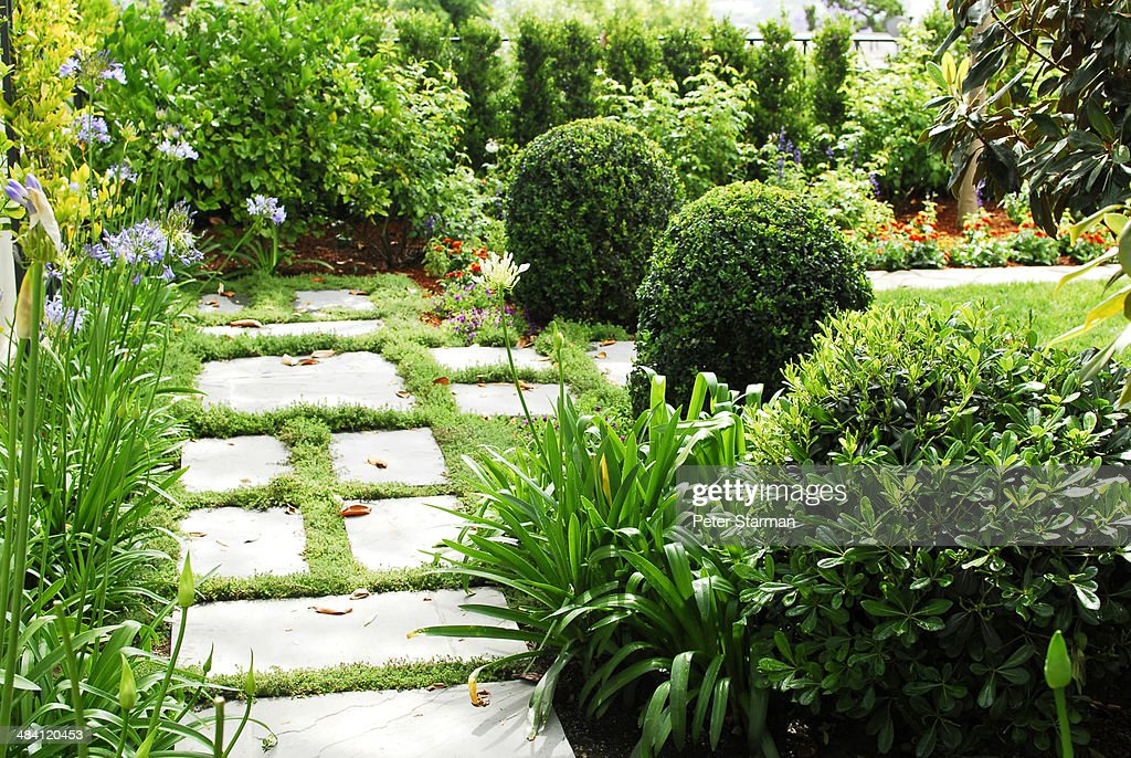 Path way in a modern landscaped yard