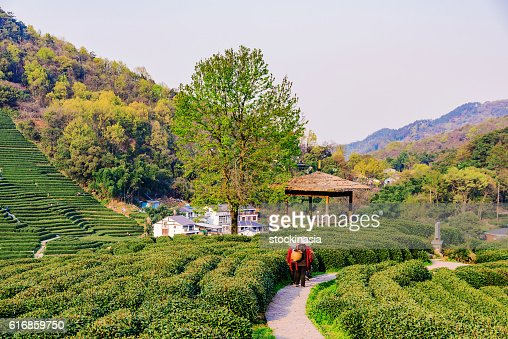 Path with farmers : Stock Photo