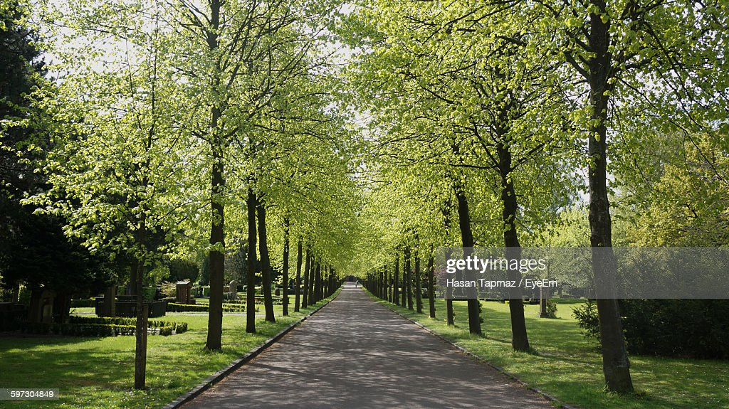 Pathway Amidst Trees At Park