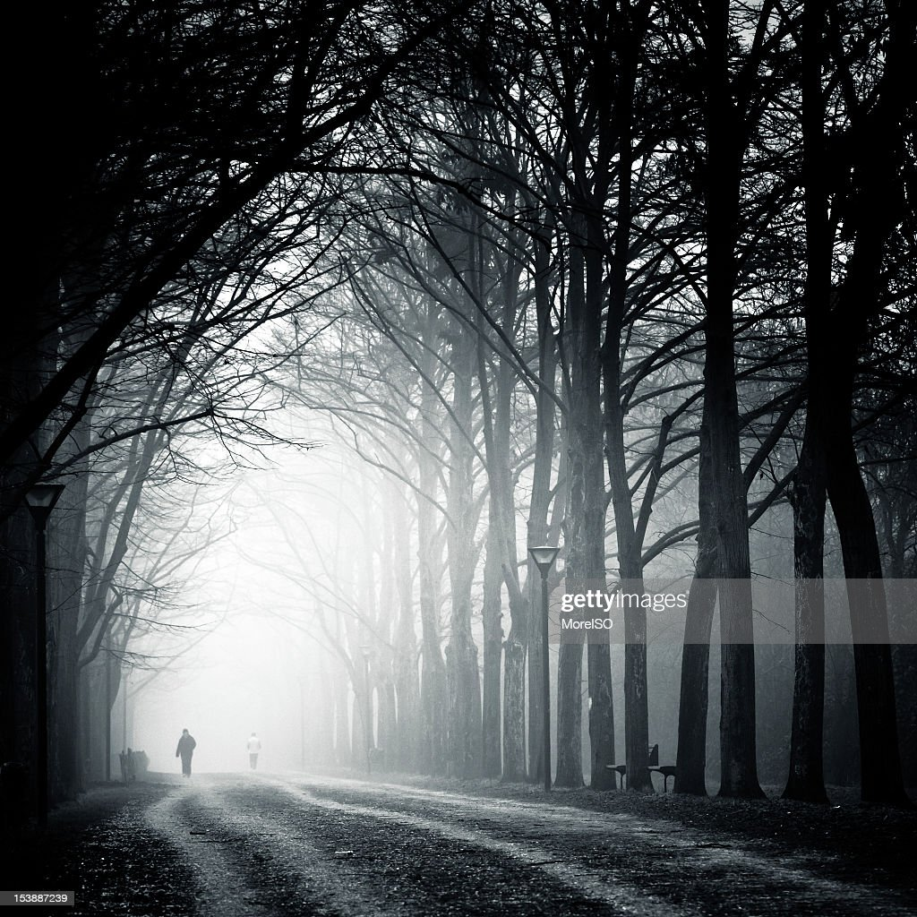 Country Road Tree Canopy in the Fog : Stock Photo