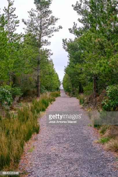 Pathway in Sligo