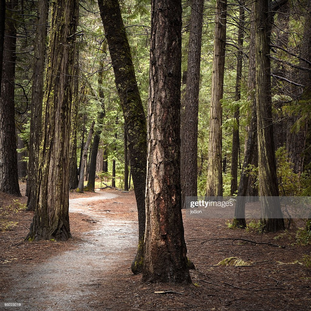 Pathway in the wood at Mariposa Grove