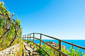 Pathway in vineyards, beautiful sea view. Manarola village in Cinque Terre national park, Italy
