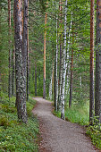Pathway on a birch forest. Finland nature wilderness. Vertical