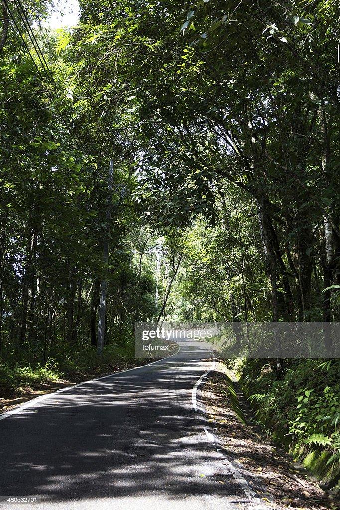 Pathway : Stock Photo