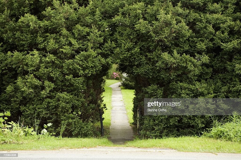 Pathway through arch in hedge