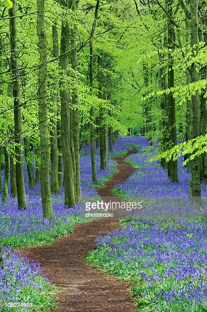 pathway through Bluebell wood