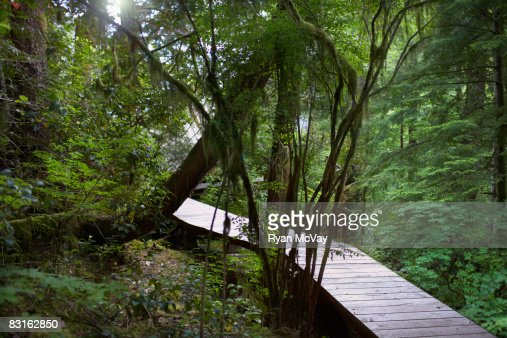 Pathway through forest. : Stock Photo
