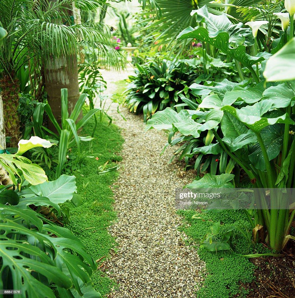 Pathway through garden
