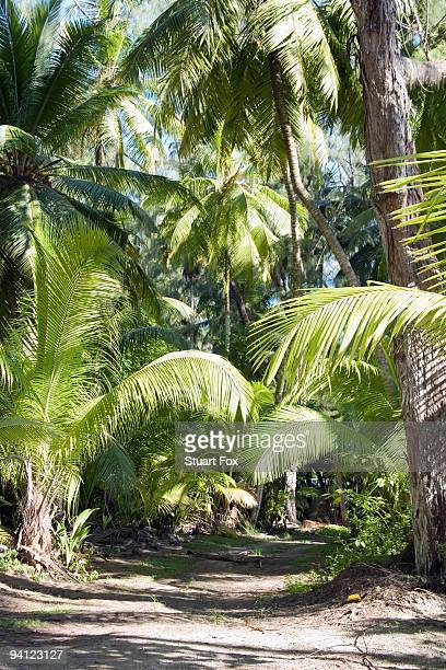 Pathway through tropical palm tree forest, Seychelles