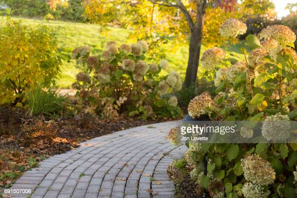 Pathway with hydrangea in fall