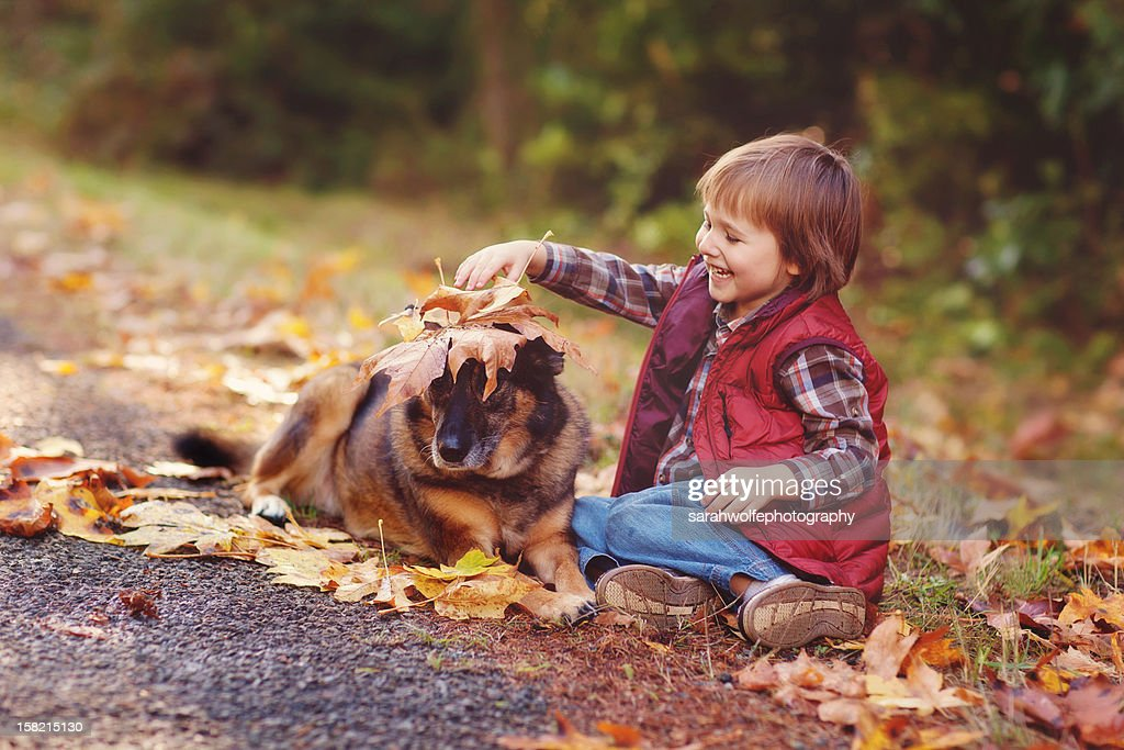 patient dog : Stock Photo