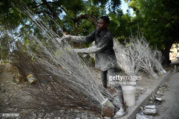 TOPSHOT Patrice paints tree branches with white paint to sell as Christmas decorations in PortauPrince on November 2017 / AFP PHOTO / HECTOR RETAMAL