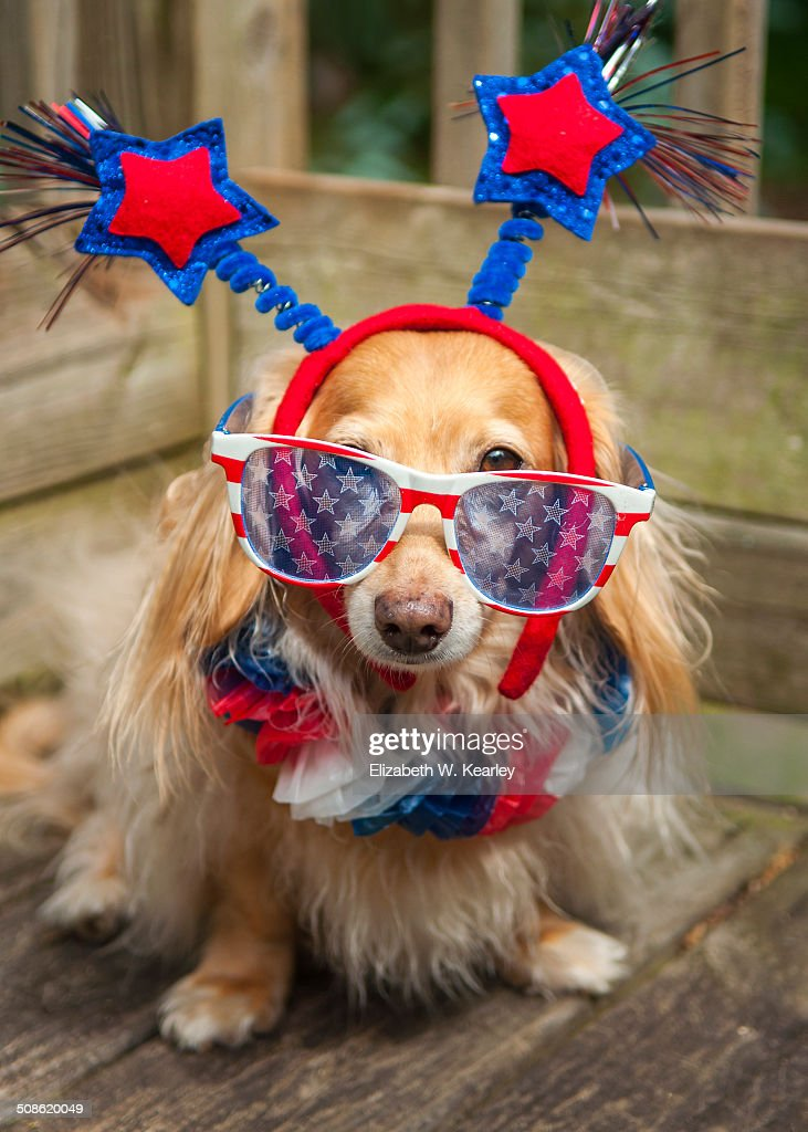 Patriotic dog wearing red, white and blue
