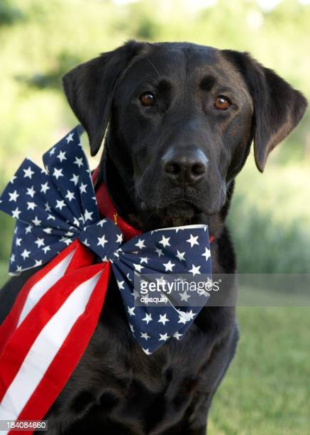 Patriotic Party Animal