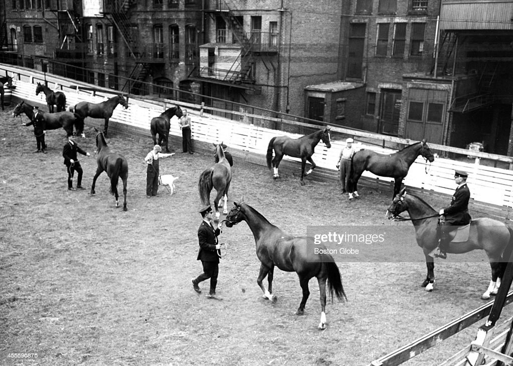 Patrolman Patrick Hurley seated on his mount watched the horses being exercised in the corral