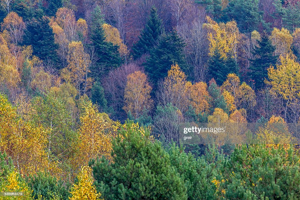 Patterns of Colourful Trees with Autumn Foliage : Stock Photo