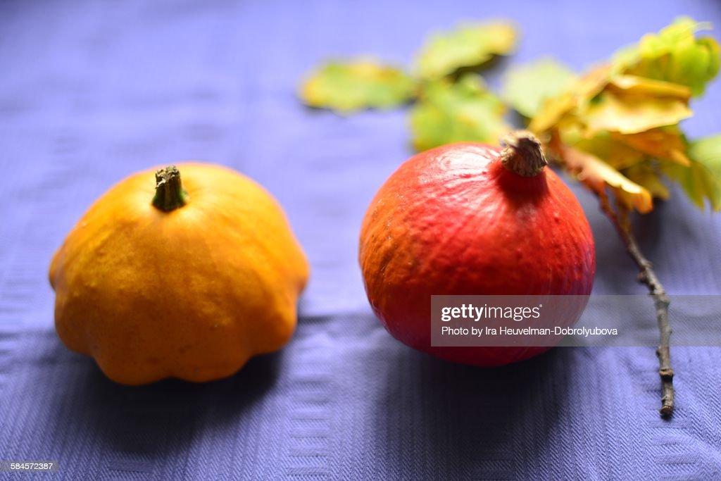 Pattypan squash and hokkaido pumpkin