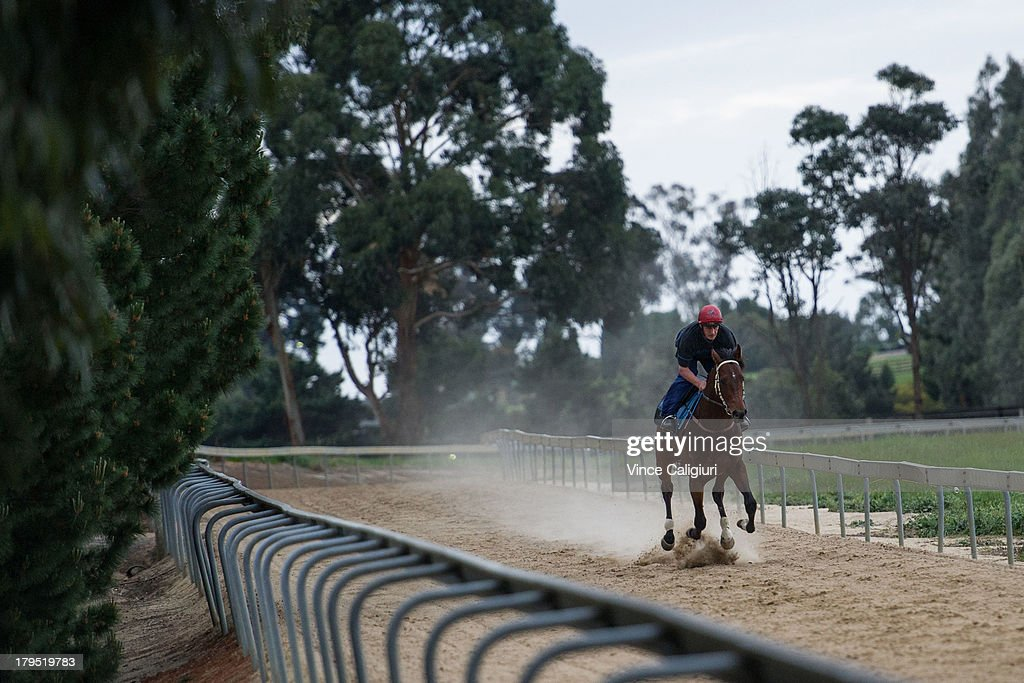 Paul Guise riding Cauthen during trackwork at Talwood Park on September 5, 2013 in Melbourne, Australia.