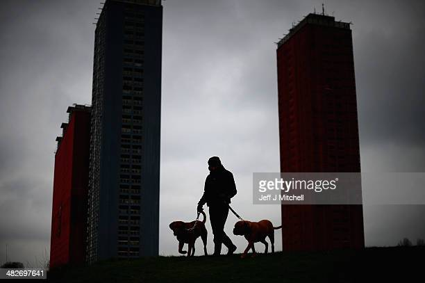 Paul Hunter walks his two Dogue de Bordeaux dogs next to the iconic Red Road flats on April 4 2014 in Glasgow Scotland Five of the six tower blocks...