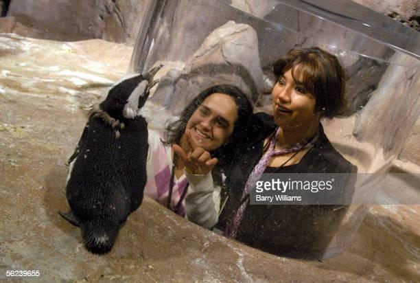 Paula Romero and Jineth Nieto look at an Africian Penguin in the Cold Water Queat exhibit at the Georgia Aquarium November 19 2005 in Atlanta Goergia...