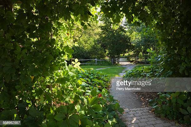 Paving and gravel path in garden with vines hanging from wooden pergola